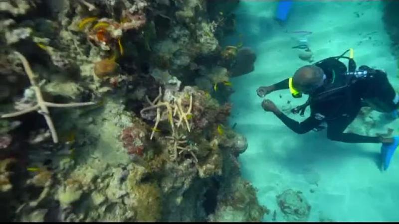 Distruse de om, recifurile de corali din Jamaica prind iar viață