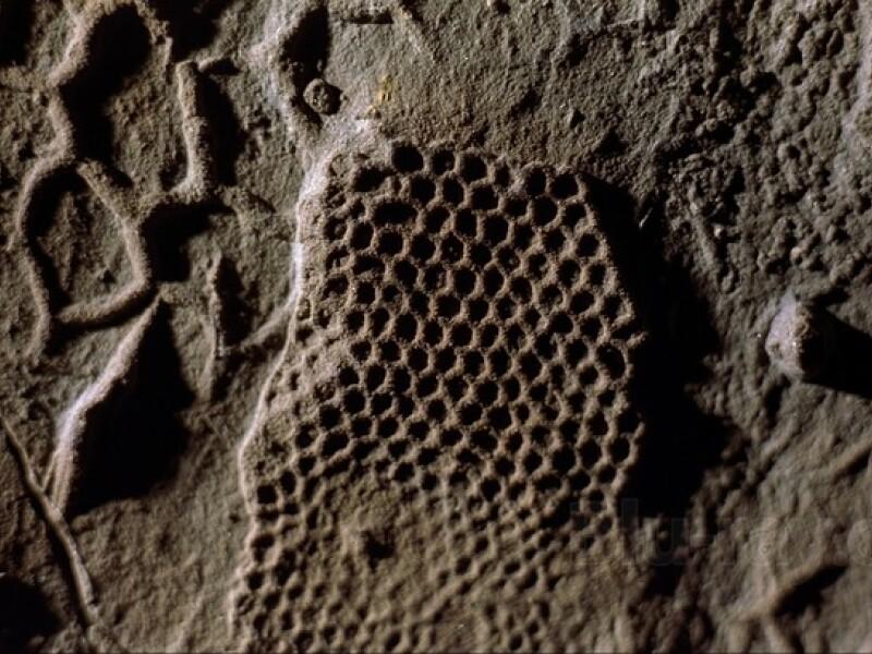 Paleodictyon Nodosum