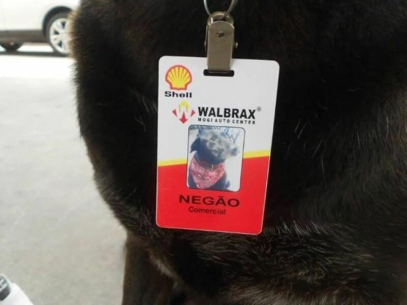Un labrador abandonat a fost gasit de o femeie care l-a angajat! Ce job are acest caine: