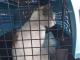 O pisică, prinsă în timp ce încerca să aducă droguri într-o închisoare. Ce se va întâmpla cu ea