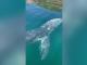Apariție de senzație în sudul Italiei. O balenă cenușie, surprinsă de amatorii de scufundări