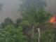 Incendiile fac ravagii în Amazon. Norul de fum se vede din spațiu