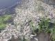 Dezastru ecologic la Iași: râu plin de pești morți. Ce explicații au specialiștii