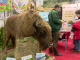 Cum sunt întâmpinați vizitatorii la cel mai mare târg de turism al României