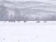 Zeci de cărpioare și-au făcut apariția pe marginea DN1, la ieșirea din Avrig