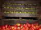 România are prea multe mere. Ce fac producătorii pentru a nu arunca recolta bogată