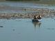Gunoaie pe Lacul Bicaz