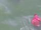 Acesta e adevăratul Hellboy. Înfricoșătoarea arătare care a ieșit din apă, dintre trei diavoli de mare