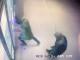 Primele imagini cu momentul în care 2 indivizi aruncă în aer un bancomat din Capitală