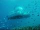marea bariera corali, mini submarin,