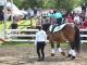 terapie cu cai