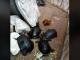 Zeci de țestoase, confiscate de Garda de Mediu din curtea unui restaurant chinezesc din Timișoara