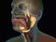 Glande salivare