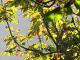 Vremea azi, 16 septembrie. Vin zile frumoase de toamnă, în toată țara