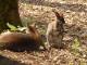 Toți cangurii de la Grădina Zoo din Timișoara au fost uciși. Cum a fost posibilă tragedia