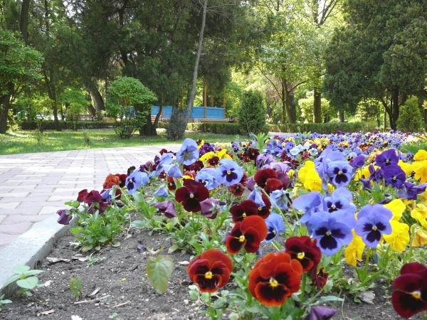 Buget de 28 milioane de euro pentru plantat de floricele!