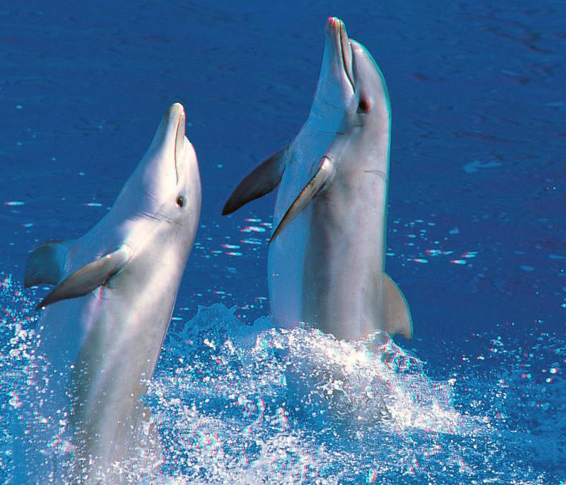 Noii delfini de la Constanta vor avea primul spectacol peste doua saptamani