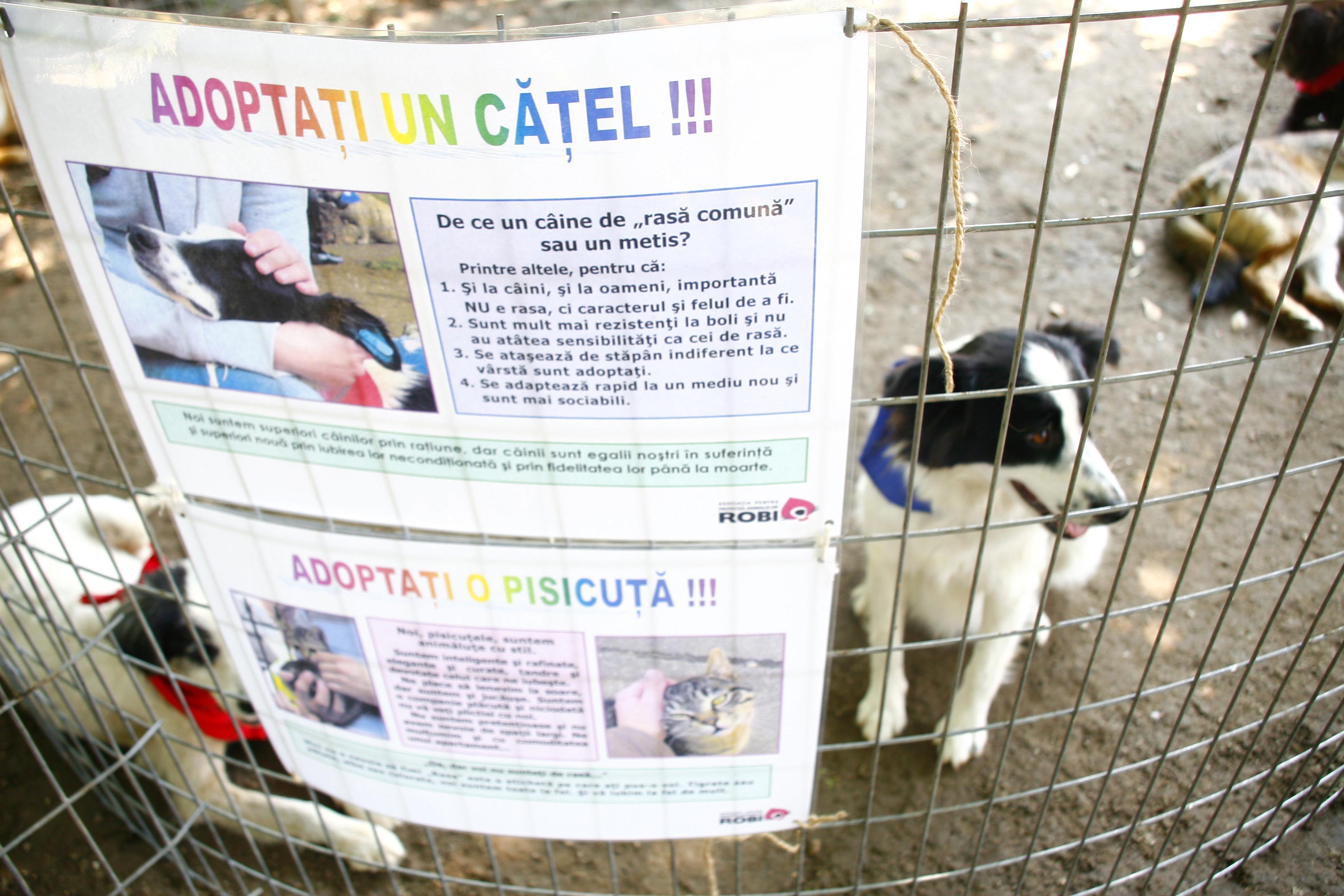 Iubesti cainii vagabonzi din Bucuresti? Ai putea sa adopti!