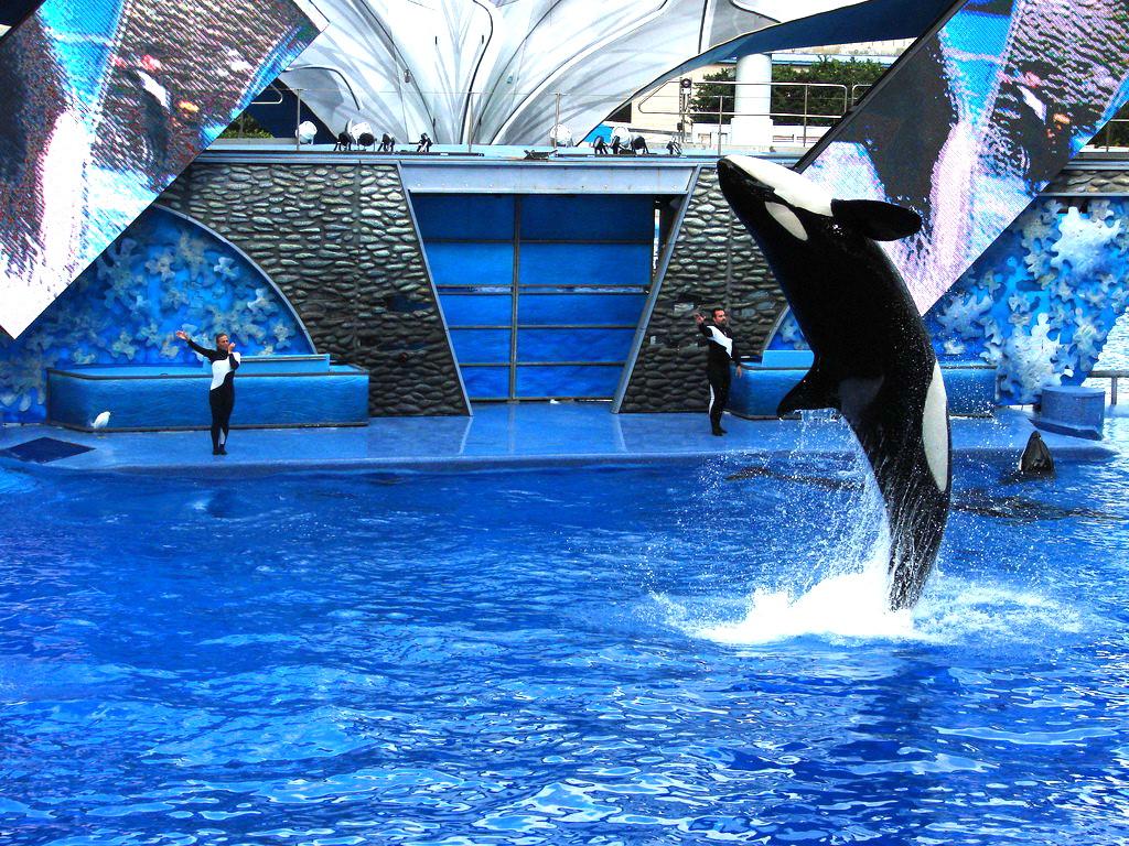 Noul Delfinariu din Constanta va avea balene ucigase. Rupt din filmele SF