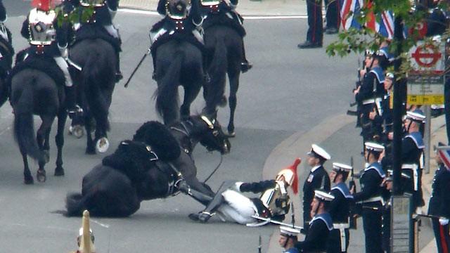 N-ai vazut la TV: calul fara calaret si paracliserul care face tumbe