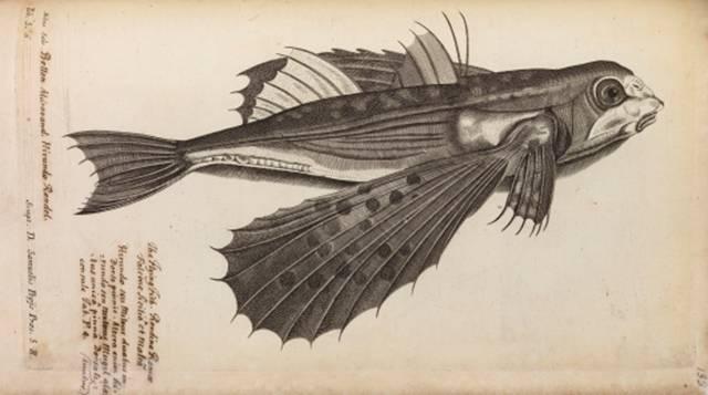 Acest desen putea sa schimbe evolutia umana si sa-i ingroape cariera lui Isaac Newton