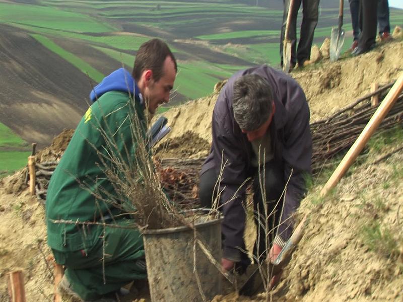Peste 300 de puieti de molid si larice au fost plantati de zeci de voluntari in Alba Iulia