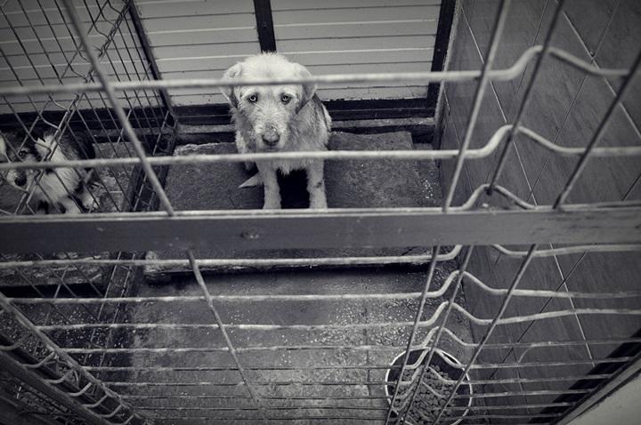 Sambata va avea loc un nou targ de adoptii canine la Timisoara: