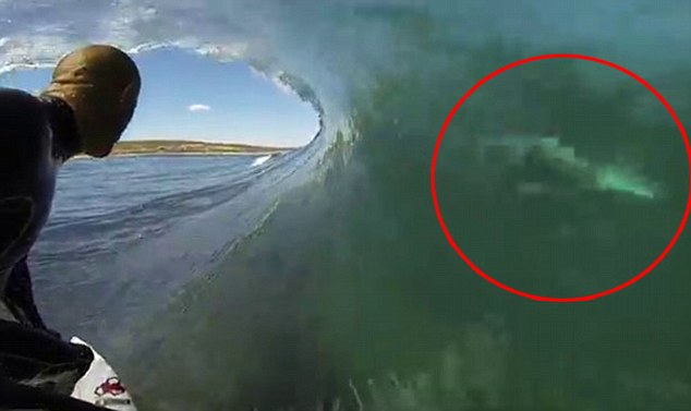 Un surfer trece infricosator de aproape de un rechin alb, in Australia. VIDEO