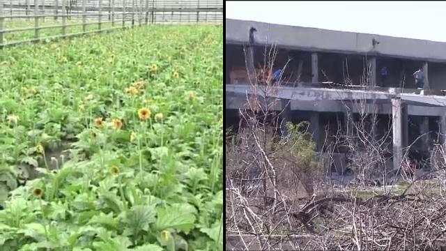 Serele Codlea, raiul hotilor de fier vechi. Cum arata locul de unde plecau la export milioane de tone de flori in '89