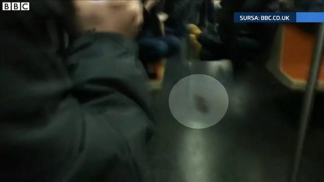 Panica la metroul din New York. Un sobolan urias i-a facut pe pasageri sa tipe in cor