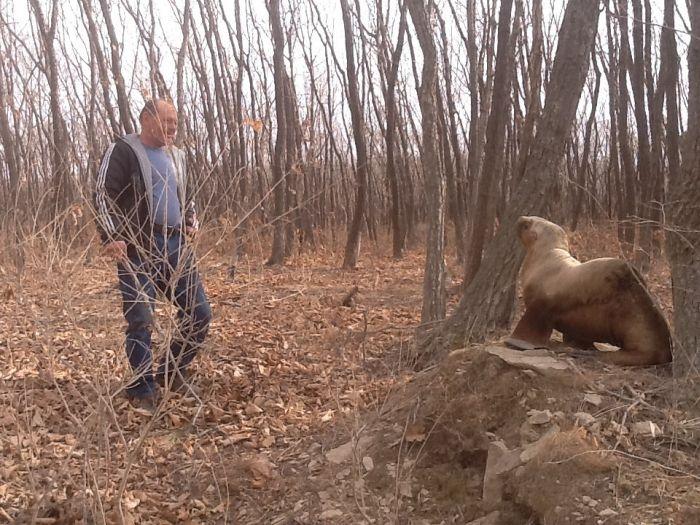 Leu de mare gasit in mijlocul padurii, in Rusia.