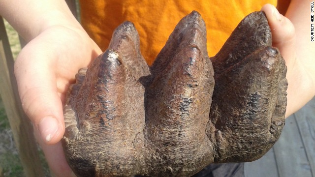 Un copil de 9 ani a descoperit dintele unei creaturi preistorice. FOTO