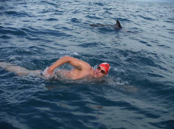 Amenintat de un rechin, un inotator e protejat de delfini in largul oceanului. VIDEO