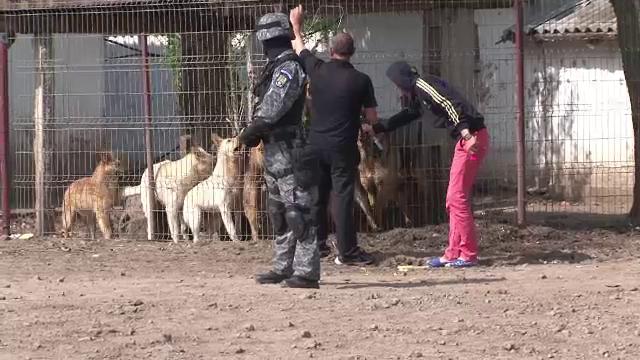 Caini ridicati cu mascati de la o ferma din Braila. Un barbat a fost gasit mancat de viu de animale