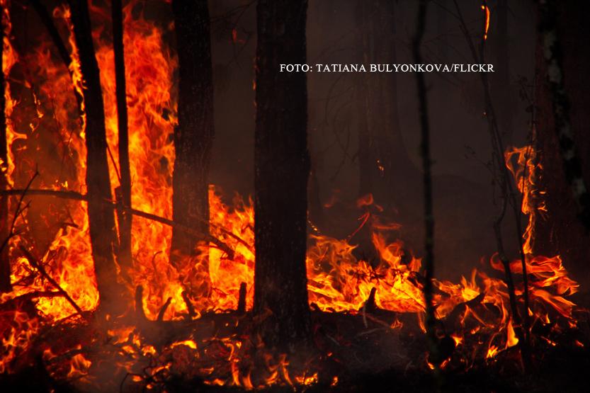 Incendiile uriase din Rusia au consecinte neasteptate in America. Ce s-a intamplat in Seattle din cauza curentilor de aer