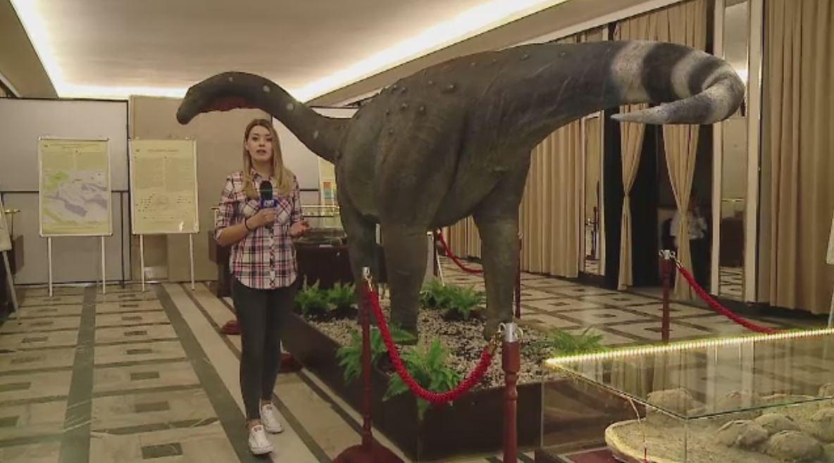 Gigantii au trait in Romania. Expozitia de dinozauri din Cluj, pentru care specialistii au muncit 15 ani
