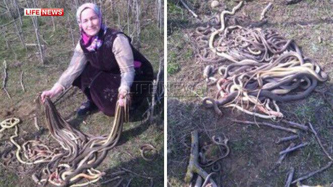 Gestul facut de o femeie din Rusia dupa ce a descoperit un cuib de serpi in timp ce planta cartofi in gradina. FOTO