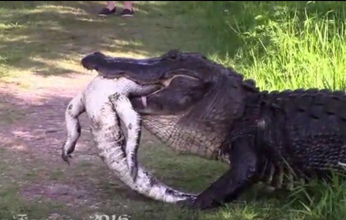 Imaginile terifiante surprinse intr-o rezervatie din Florida. Ce cred oamenii de stiinta despre acest incident. VIDEO