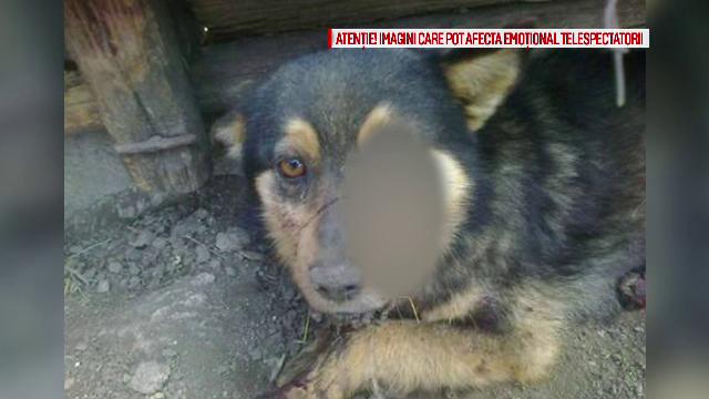 Un botosanean de 32 de ani a torturat cainele vecinilor pentru ca ar fi latrat. 2.000 de oameni au cerut sa fie pedepsit