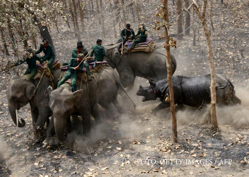 Momentul in care un rinocer ataca elefantii dintr-un parc din Nepal. Explicatia ingrijitorilor