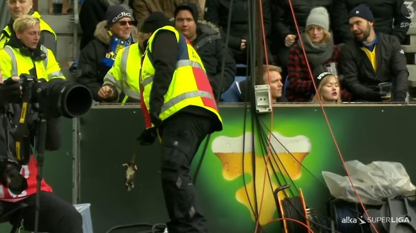 Fanii echipei Brondby din Danemarca au aruncat cu sobolani morti in directia jucatorilor de la FC Copenhaga. VIDEO