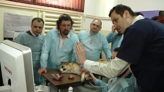 Cei mai multi veterinari de la noi invata abia acum sa foloseasca un ecograf. Cate animale mor din cauza bolilor nedetectate