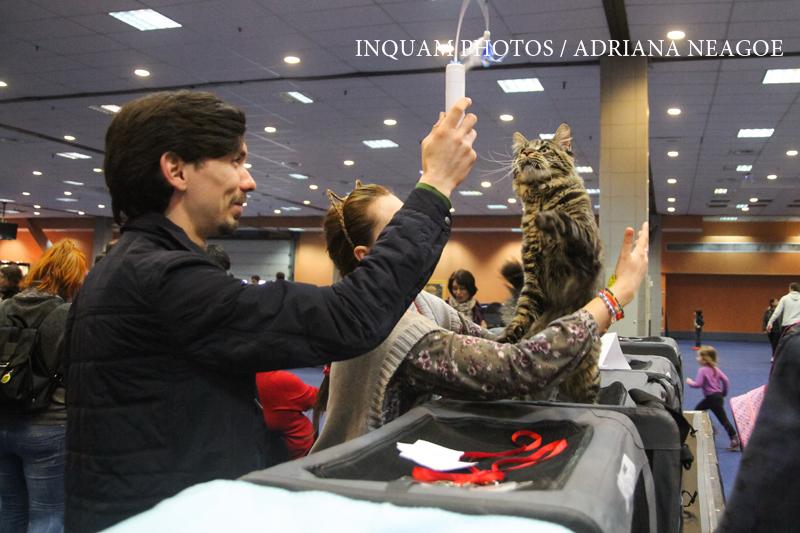 Primaria Capitalei vrea sa interzica folosirea animalelor