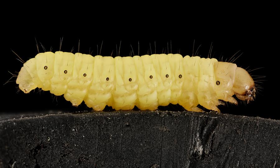 Un vierme banal ar putea rezolva problema poluarii cu pungi de plastic. Cum a fost facuta descoperirea