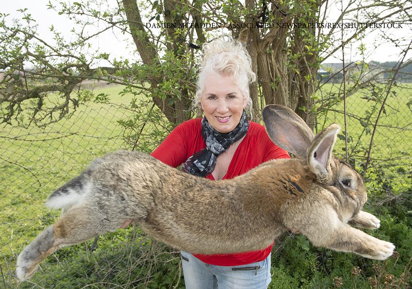 Puiul celui mai mare iepure din lume,