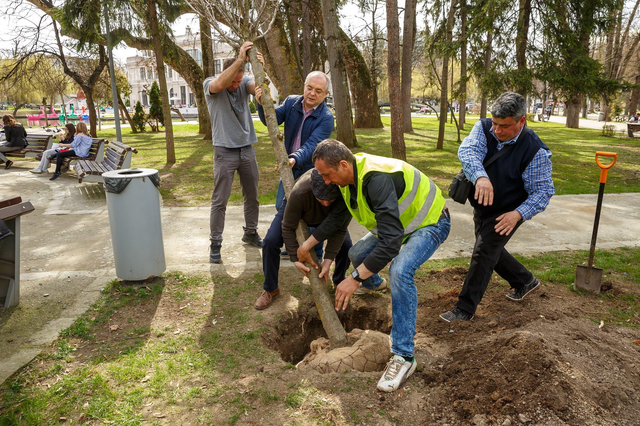Emil Boc, din nou cot la cot cu muncitorii. Primarul Clujului a plantat copaci într-un parc