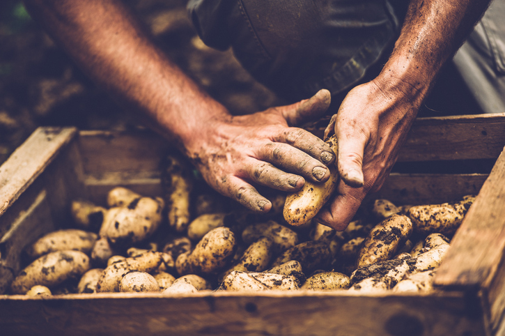 Noi scumpiri în luna aprilie. Pretul unui kilogram de cartofi