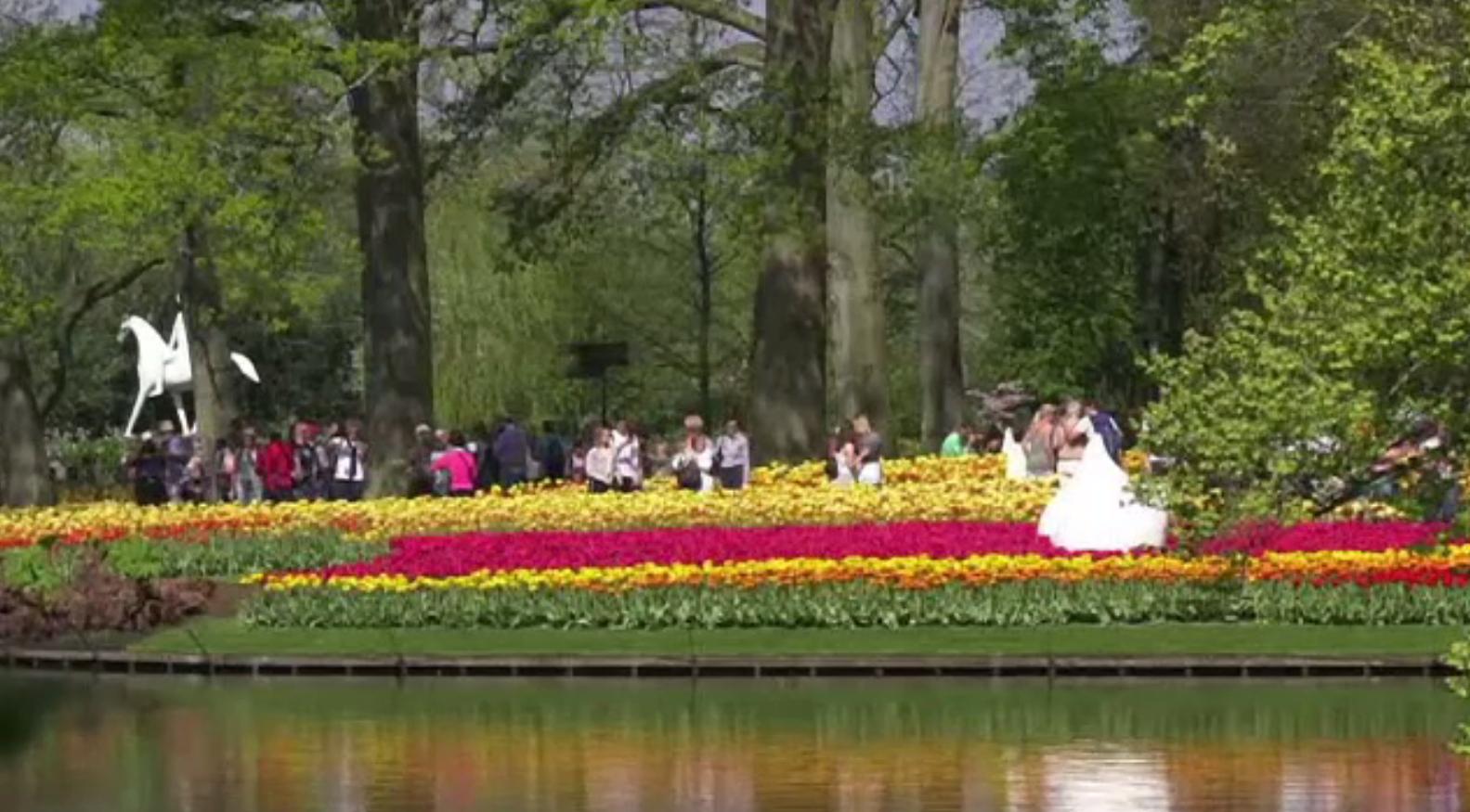 Olanda, vizitată intens în această perioadă pentru câmpurile de lalele
