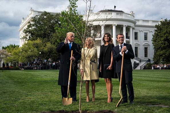 Copacul plantat de Donald Trump împreună cu Emmanuel Macron la Casa Albă a dispărut