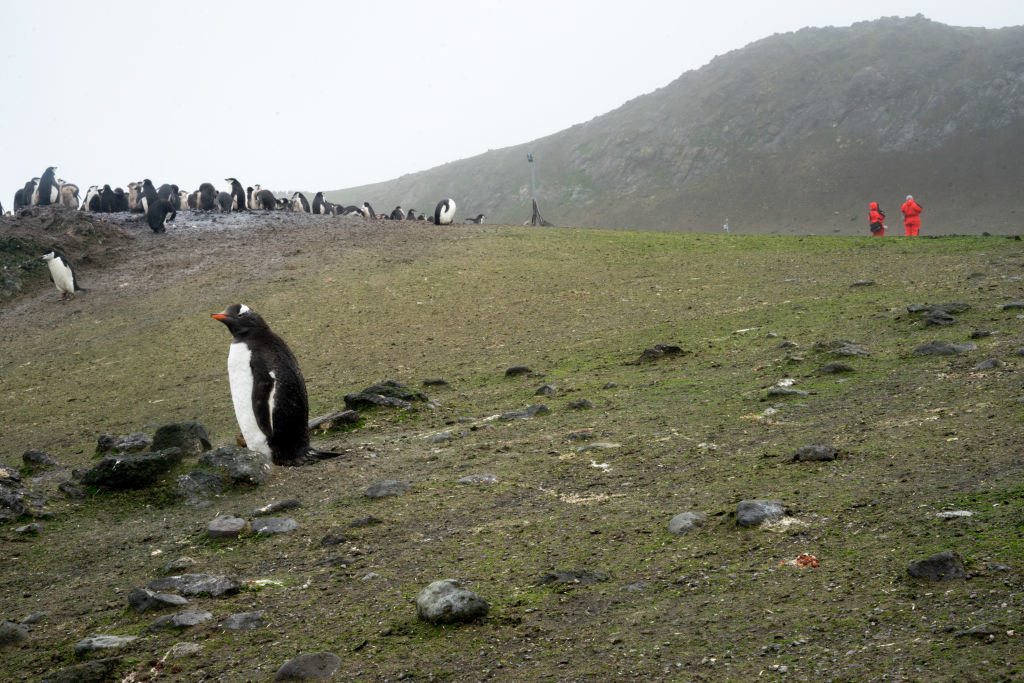 Antarctica ar putea fi verde din nou. Descoperirile care vor schimba regiunea polară